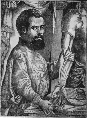 Андрей везалий (1514—1564)