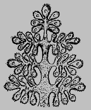 Генеалогическое древо пятой коренной расы