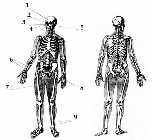 Обобщённая схема телесных повреждений игоря дятлова.