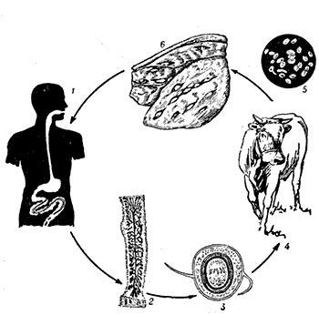Паразиты животных и человека