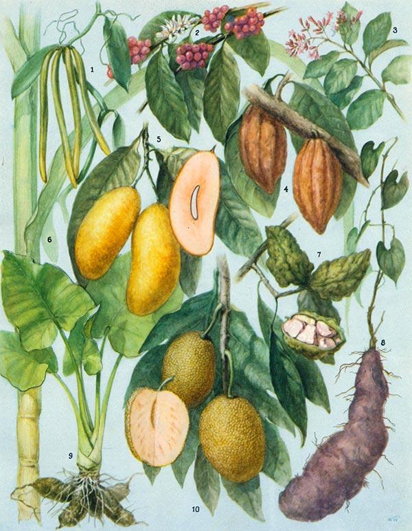 Полезные растения тропиков и субтропиков
