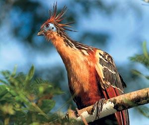 Птицы тропических лесов