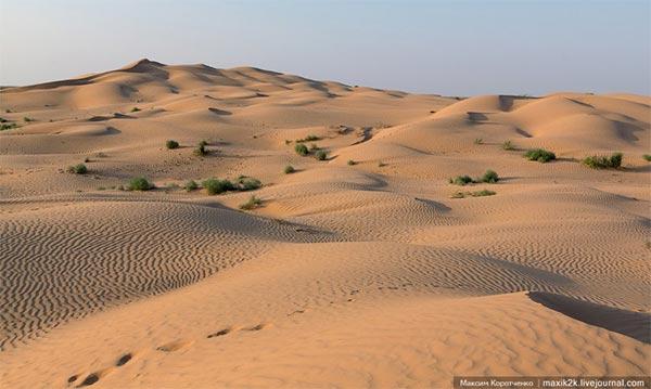В песках пустыни