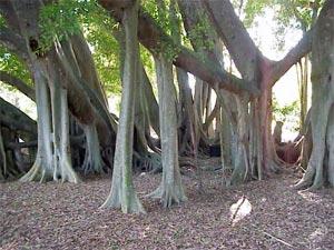 Зона тропической растительности